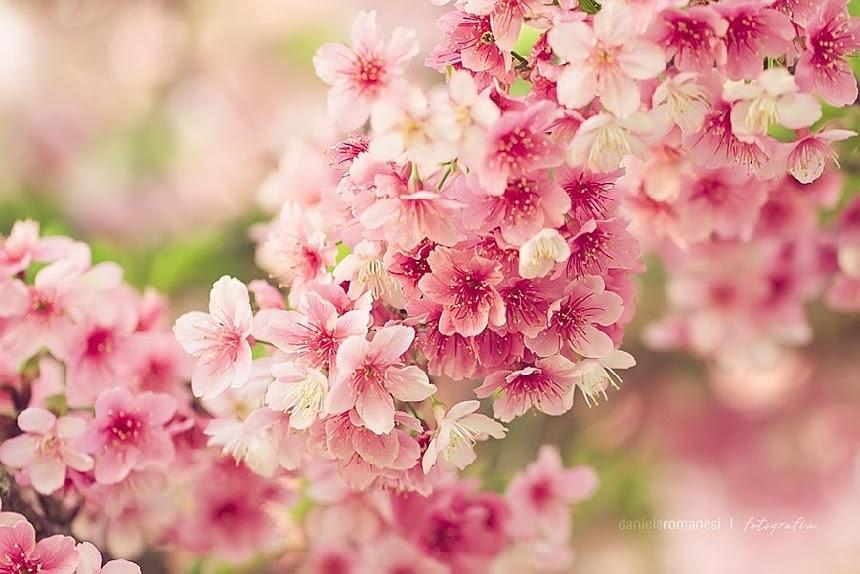 Paisajes Hermosos De La Flor Del Cerezo Por Todo El Mundospanish