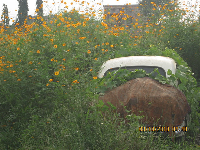 Shreeji Properties' Forest View Bungalows at Somatane PhataIMG_3138