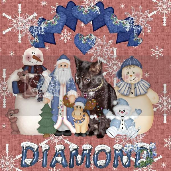 Snowmen,Santa,Miss Diamond,Domestic Cat,House Panther,Winter,Snow,Happy Holidays