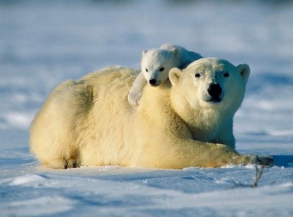 animales-abrazados-12