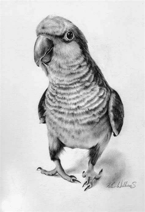 images  art  pinterest animal drawings