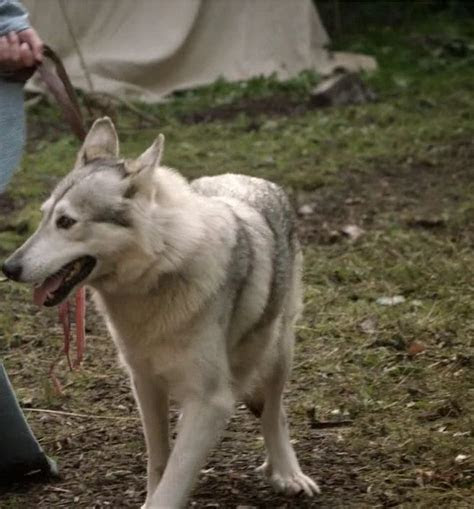 If you could give direwolves as wedding presents