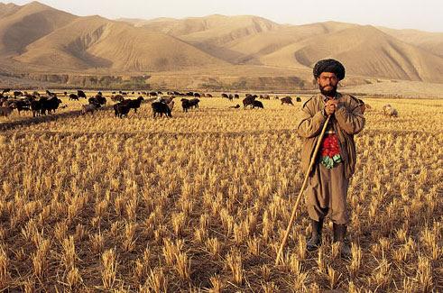 027 Talikhan farmer