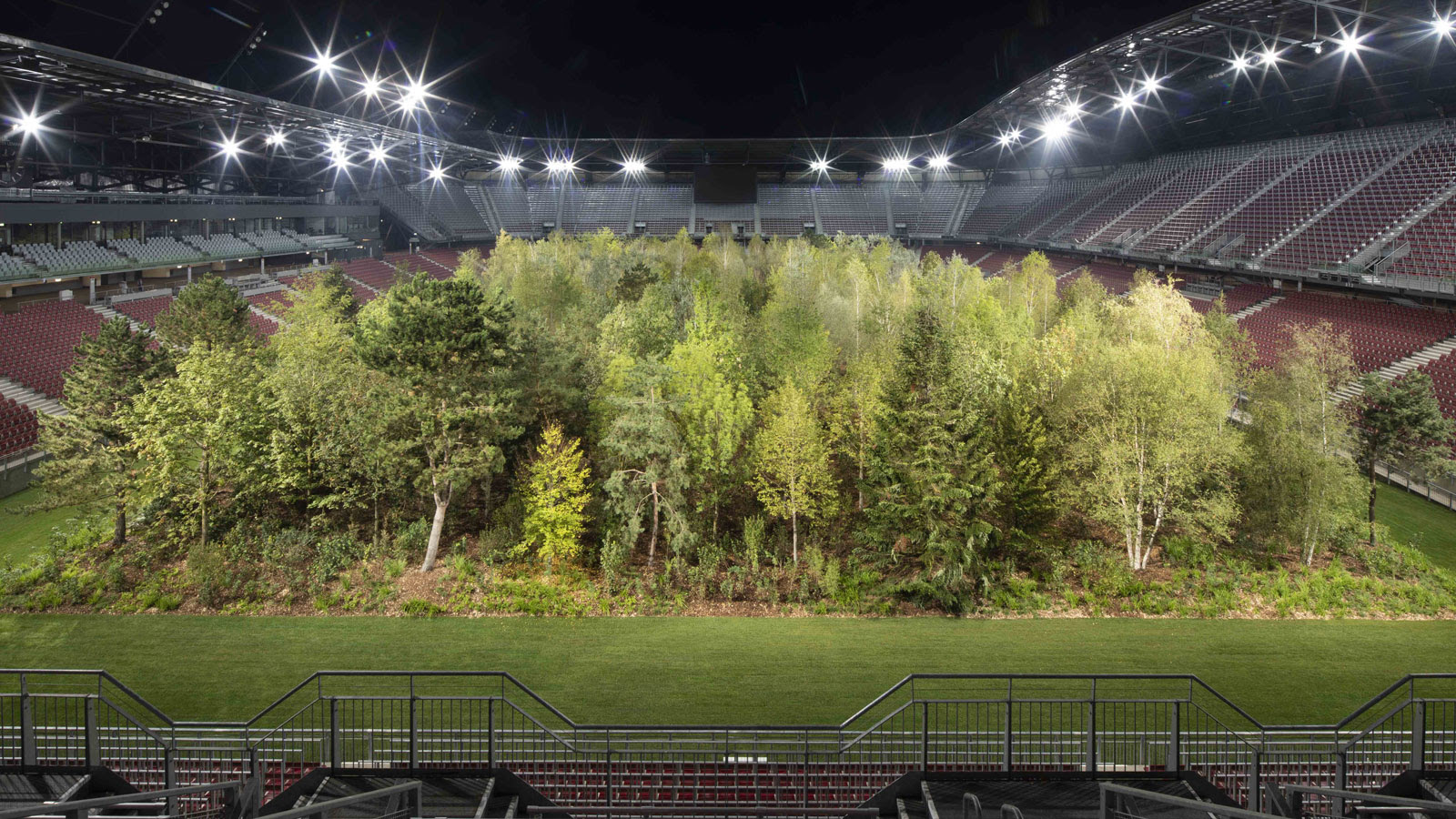 Image result for Forest grows in the middle of a football stadium
