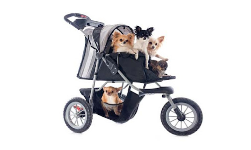 jeep pet strollers dogs image