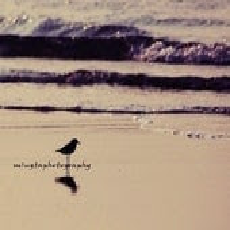 Can You Hear What I Hear - Original Bird on the beach Beach bum Ocean is calling Summer Beach bum Fine Art Print 8x8 - mingtaphotography