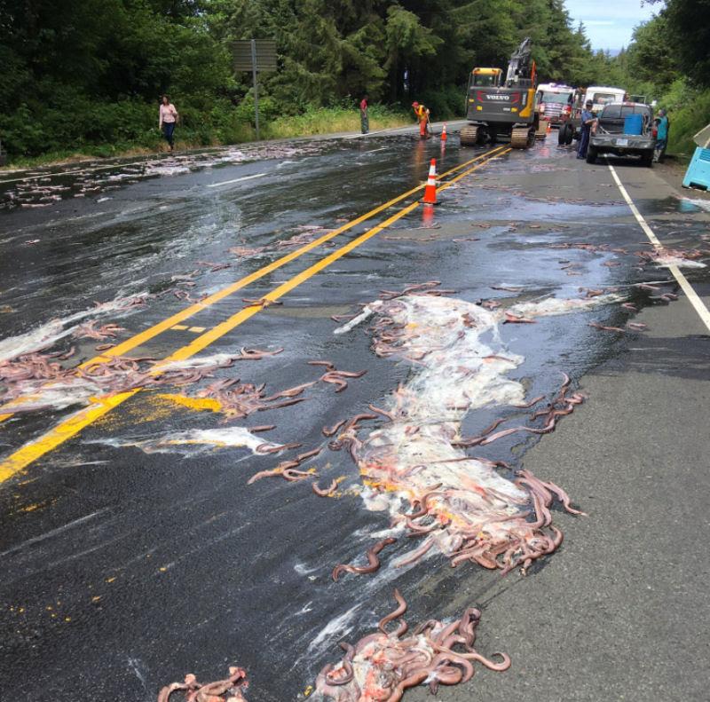 Isto é o que acontece quando um caminhão cheio de peixes-bruxa tomba ao seu lado na estrada 05