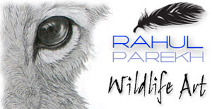 Wildlife Art of Rahul Parekh