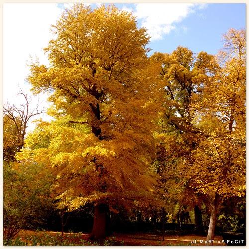 del otoño de 2010