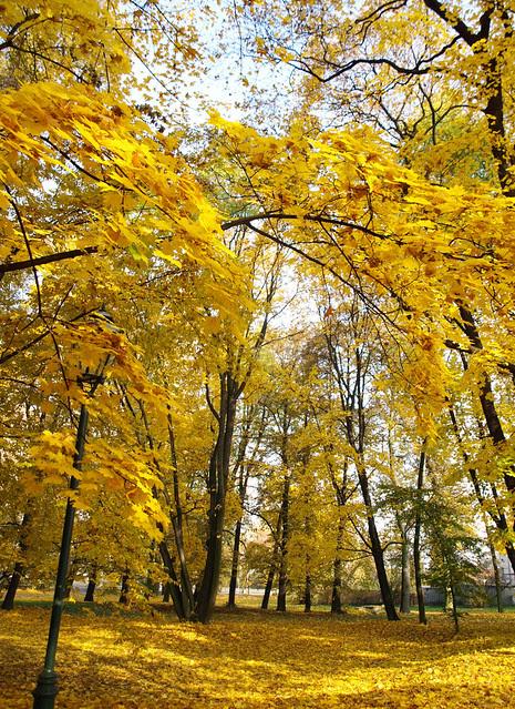 Yellows.........
