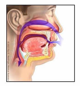 lokasi adenoid