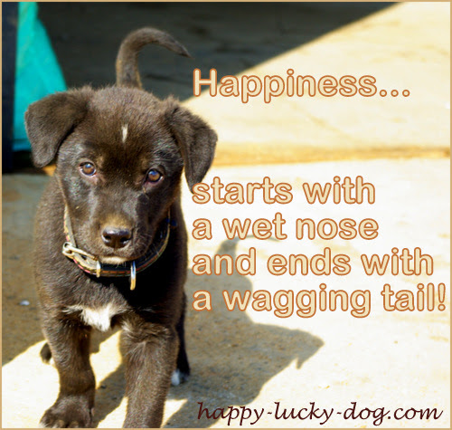 Happy Dog Quotes. Qu