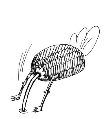 avestruz1 web