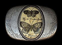 butterfly_250