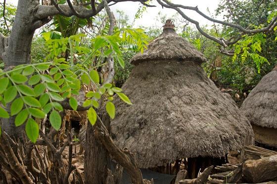 Árvores de moringa entre as cabanas dos habitantes Konso (Foto: © Haroldo Castro/Época)