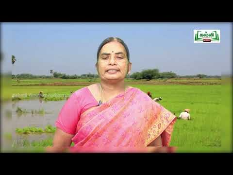7th Tamil ஒன்றல்ல இரண்டல்ல பருவம் 1 இயல் 1 Kalvi TV