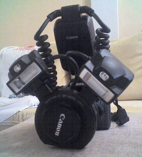 MT-24EX Twin Flash on a Canon 40D and MP-E65 1X-5X Macro Lens