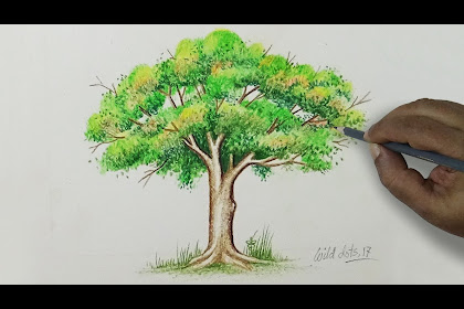 30+ Top For Easy Tree Drawing Color Pencil