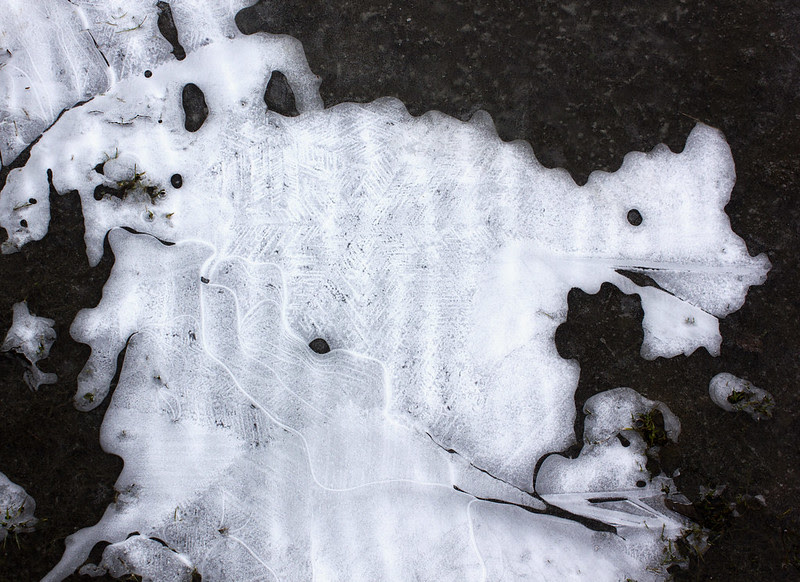The Ice Animal
