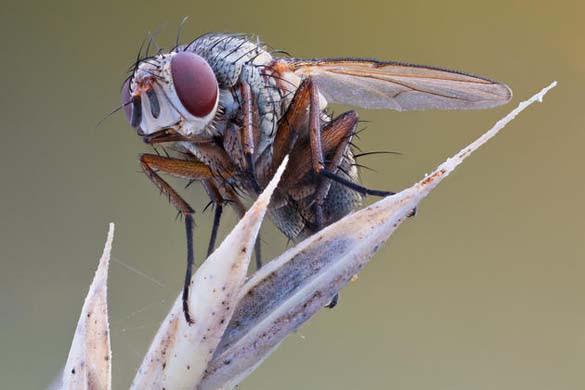 Εκπληκτικές macro φωτογραφίες εντόμων (6)