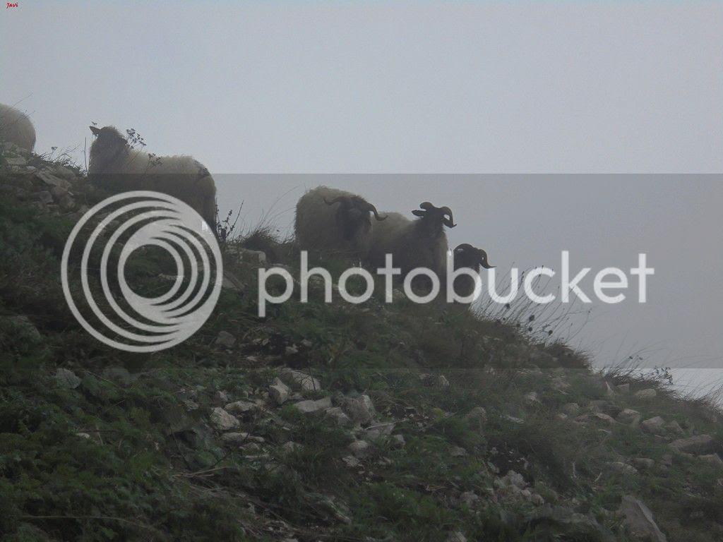 photo MONTE BERIAIN - FAJA SUR 08-11-15 023_zpslv2foxmu.jpg