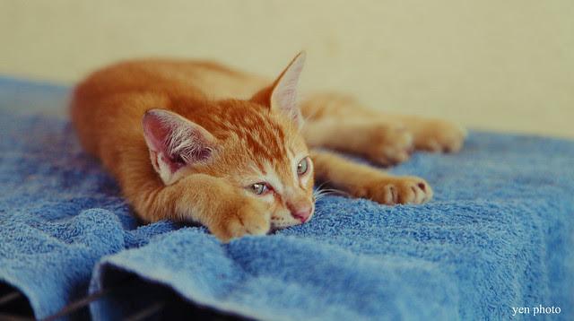 kucingbaru