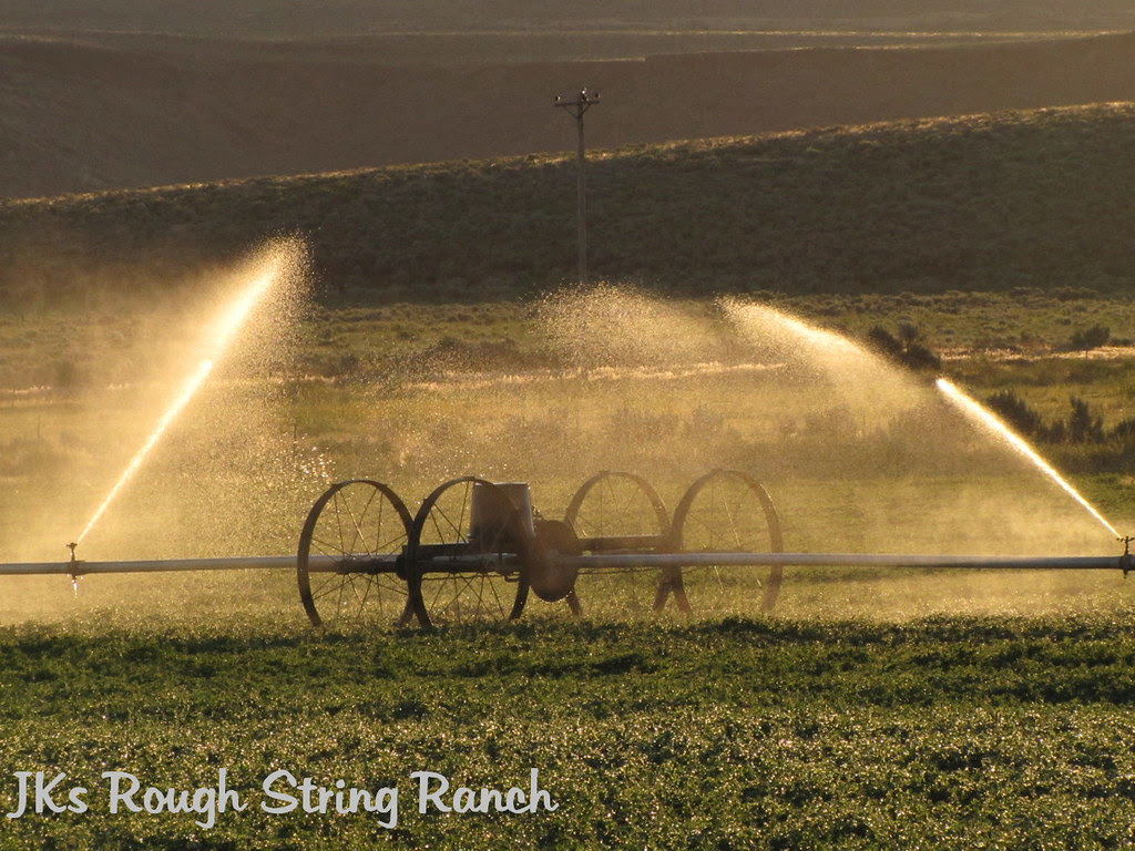 Summer Morn Irrigation