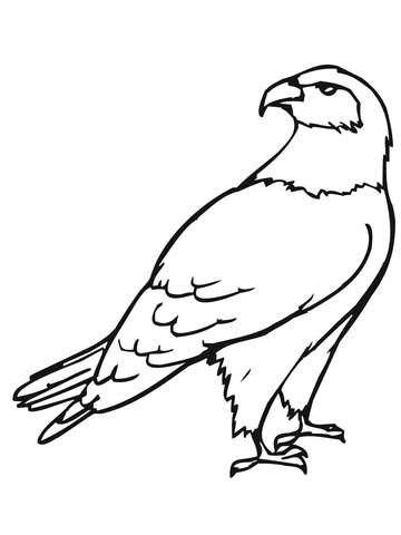 hawk bird coloring page  free printable coloring pages