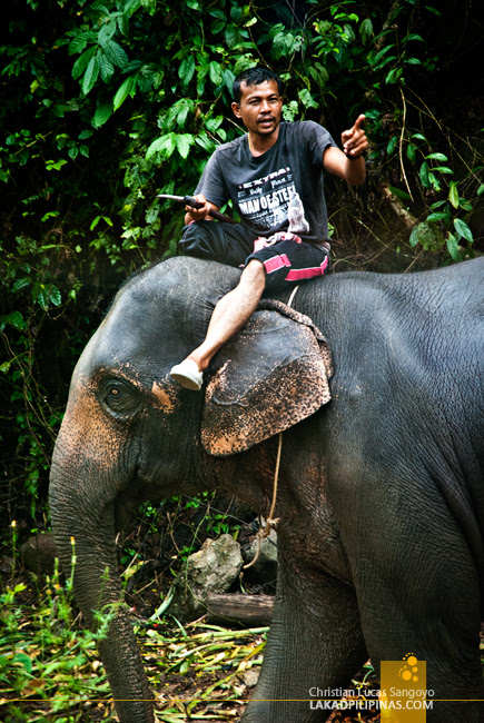 Elephant Rider along the Road to Song Praek River in Phang Nga, Thailand