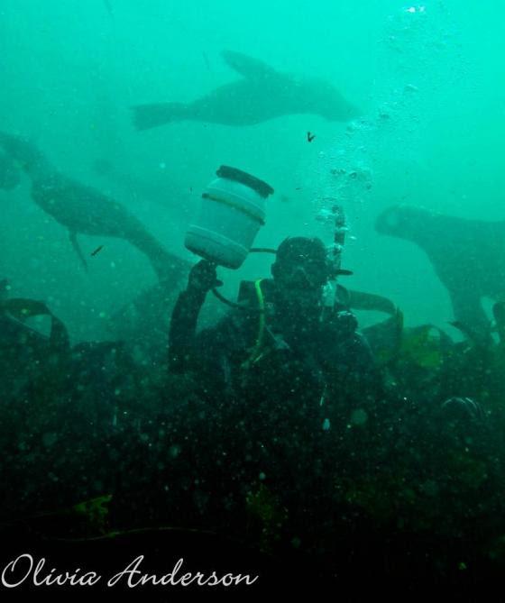 Pauline underwater seal geocache 1