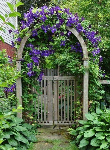Roses In Garden: Gardening Gone Wild: Clematis