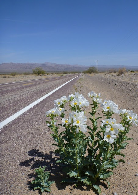 prickly road