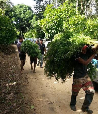Tês lavradores cuidavam e protegiam a plantação