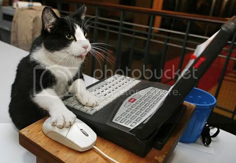 cat computer Pictures, Images and Photos