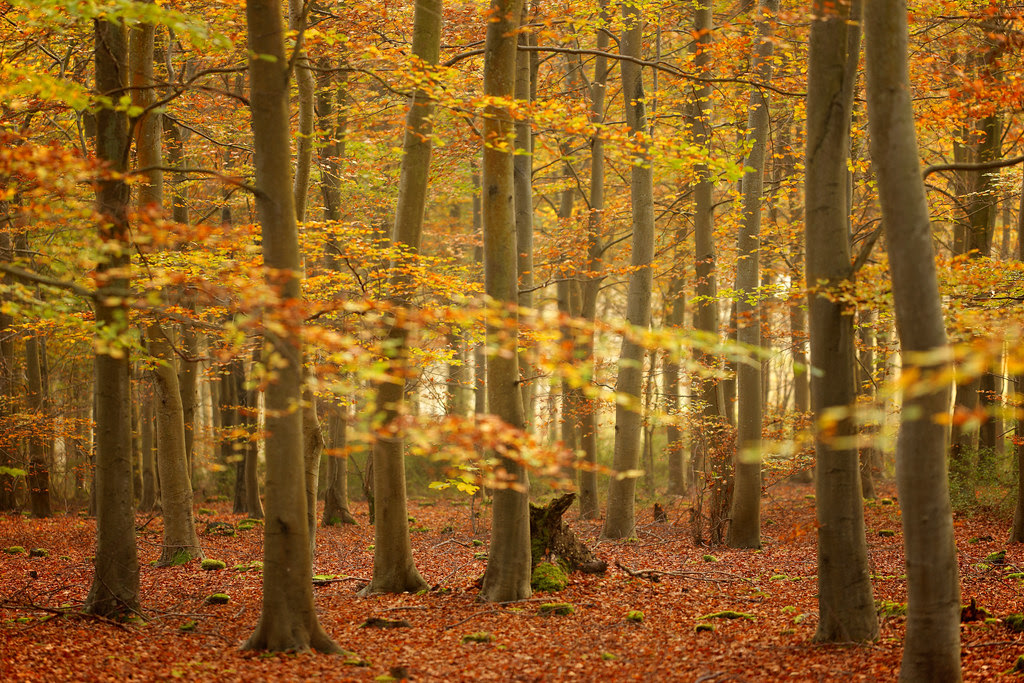 Friston Forest in October