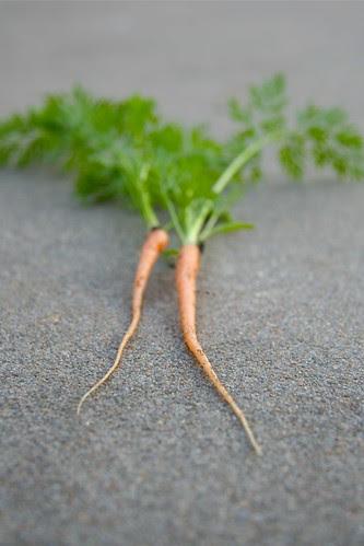 Baby Carrots - 335/365