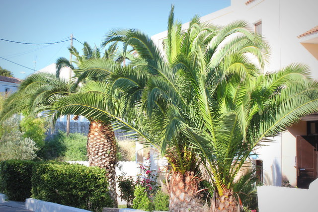 Kreikka, Samos 2012 251