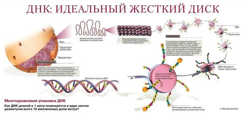 <a href='http://econet.ru/articles/tagged?tag=%D1%81%D0%BB%D0%BE%D0%B2%D0%B0' target='_blank'>Слова</a> и мысли формируют генетическую программу