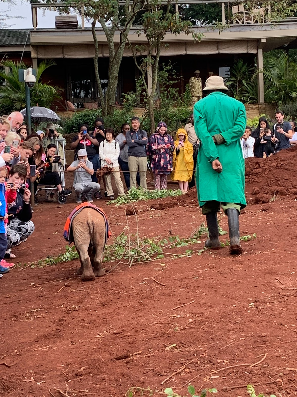 DSWT - David Sheldrick Wildlife Trust. Maarifa. Photo by Young Lee