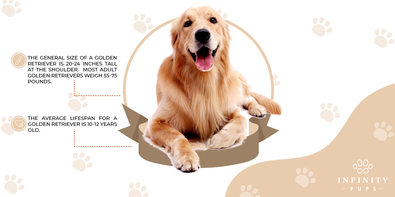 size and lifespan of golden retriever