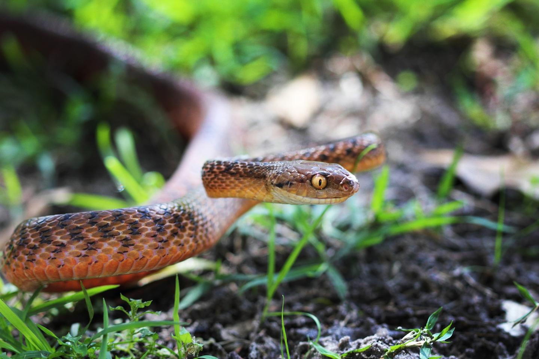 Ave de Guam deja de estar extinta y vuelve a la naturaleza