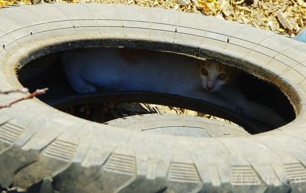 Котик (или собачка) - обязательный спутник любого укропа-карателя