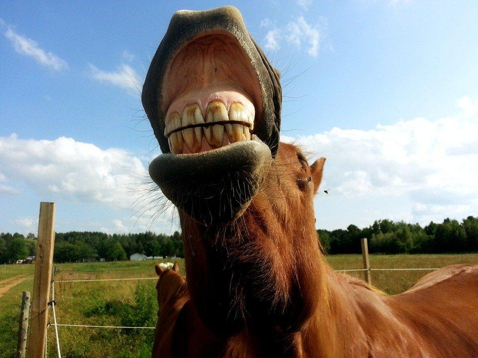 Horse, Horses, Horseback Riding, Animals, Animal