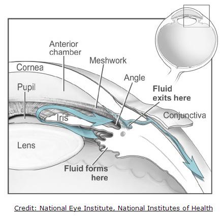 Understanding Eye Structure Fiteyes