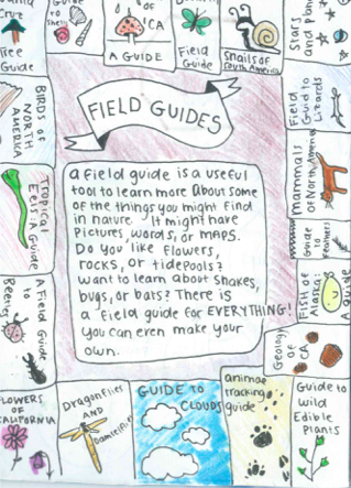 A page of notes relating to the definition and functions of a field guide