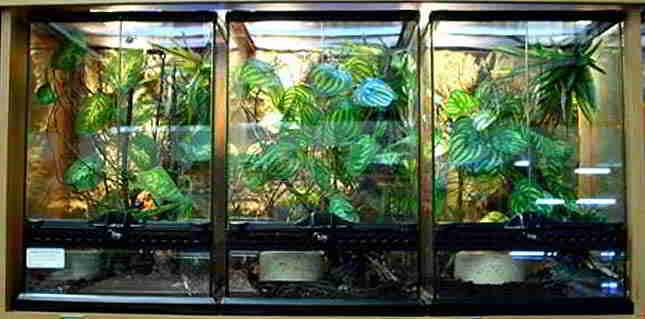 Image result for panther chameleons humidity cage