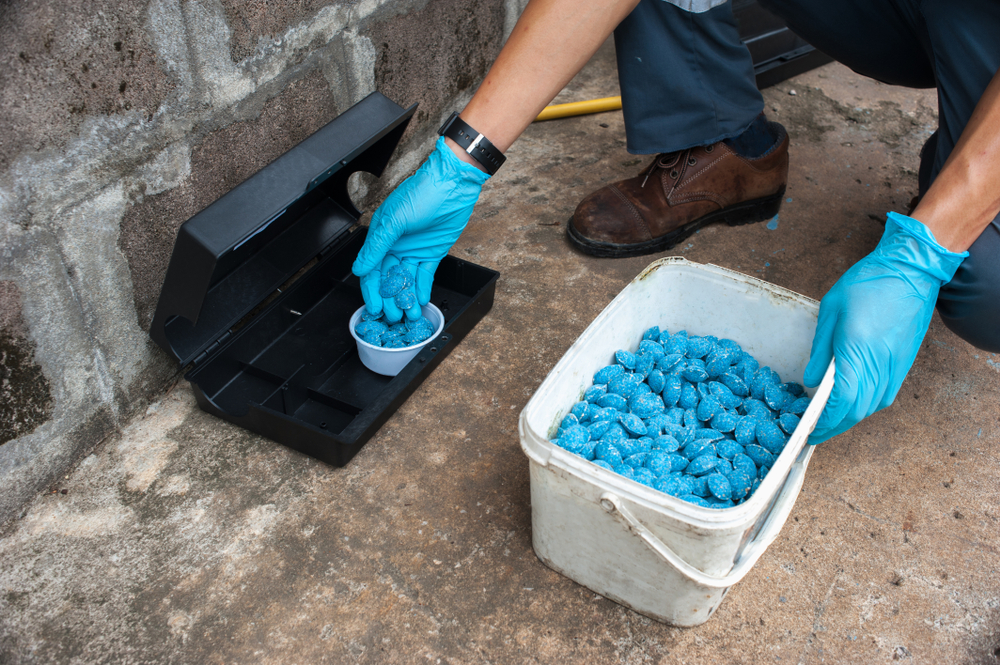 , Rat Control Review: 7 Tips For Keeping Rodents Out of Your Home