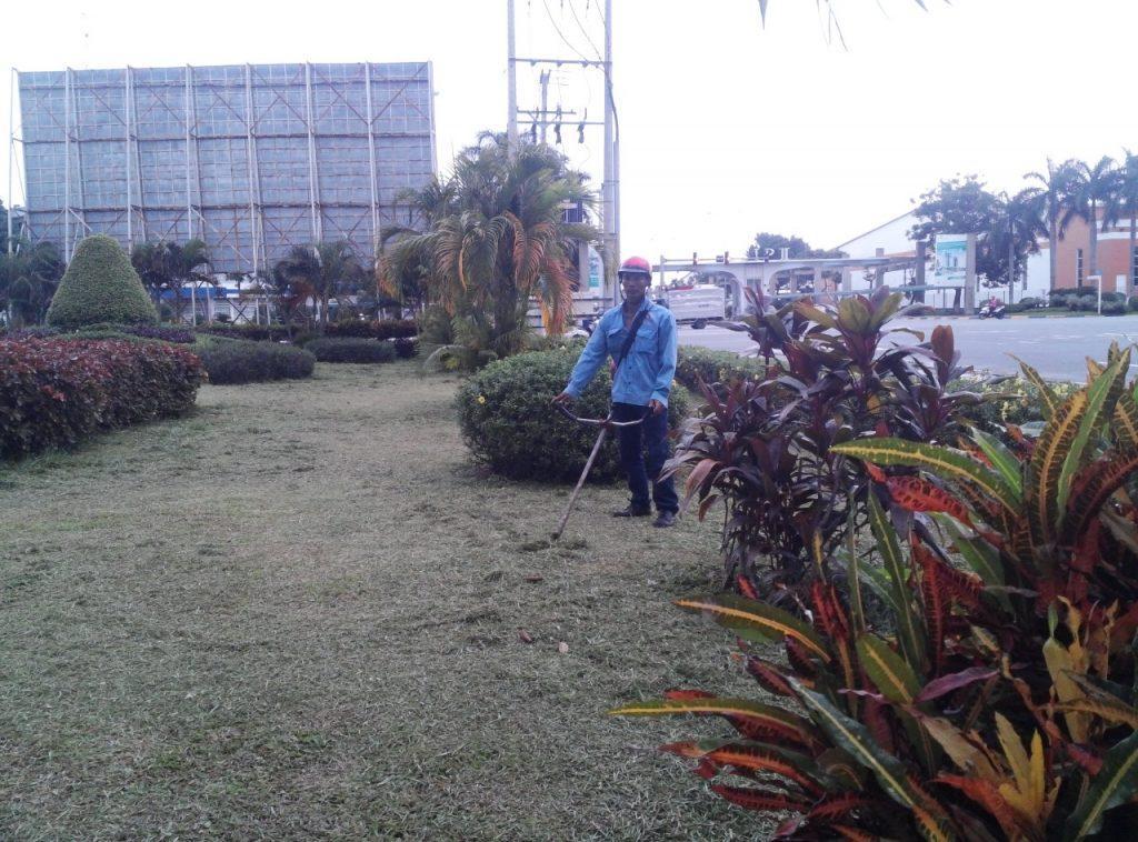 Nhiều người quan tâm di dời cây xanh ở Tây Ninh
