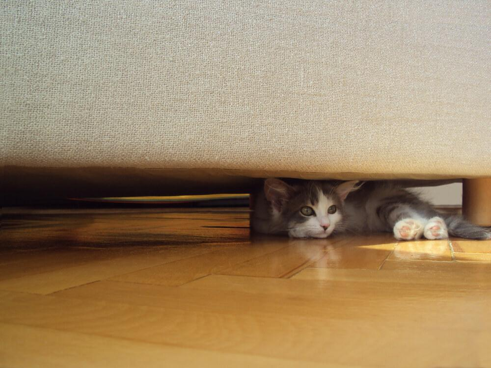 grey cat hides under a bed