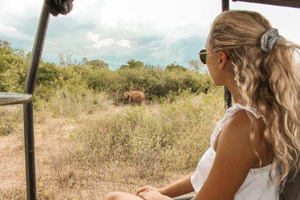 spellbound travels elephant safari udawalawe sri lanka